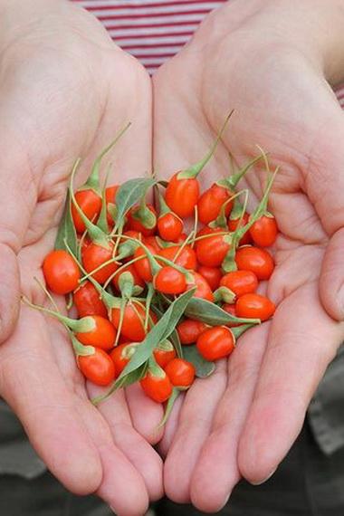ягоды годжи можно быть